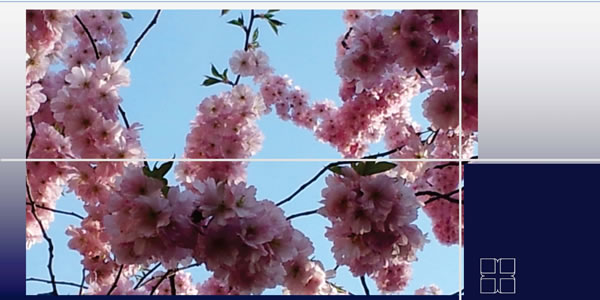 Geburtstagskarte Kirschblüte